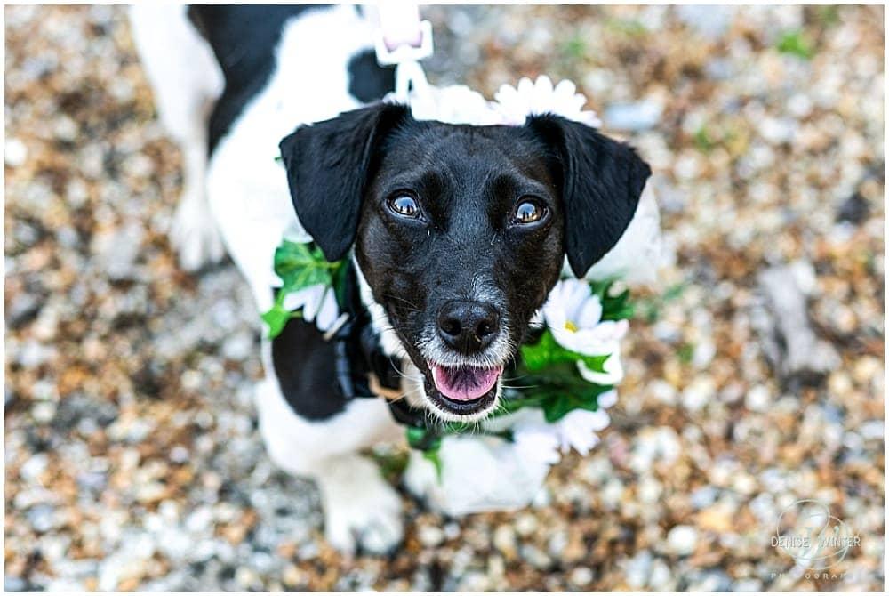 Dog at a Bury Court Wedding